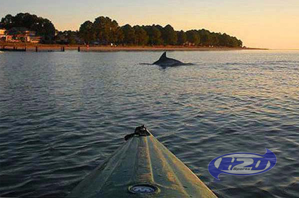 Sunset Dolphin Tour Hilton Head